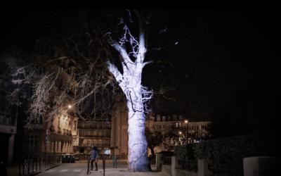 Arbre rue du Réduit de Lille – Mars 2019