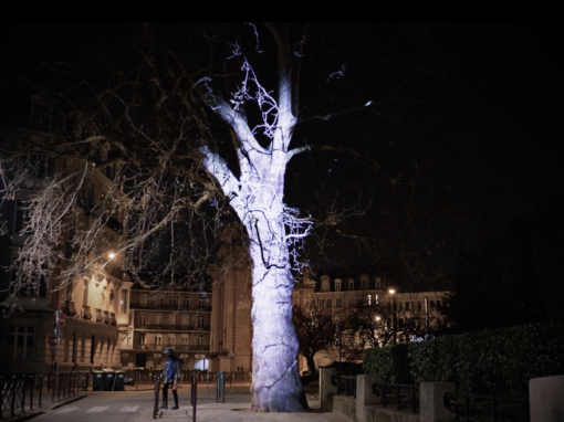 Micro Mapping Vegetal – Arbre – Lille – Festival – 2019