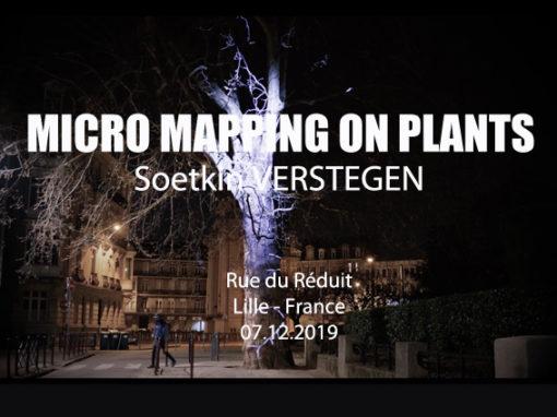 Micro Mapping Vegetal – Arbre rue du Réduit de Lille – Mars 2019